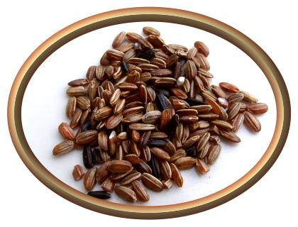 Black Japonica rice