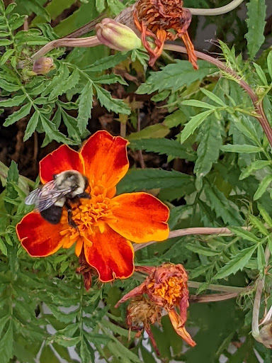 Bee on a flower, photograph by Ven. Mishin Roelofs godo
