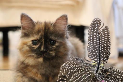 Kiden the Kitten, Photograph by Ven. Saigyo ino
