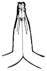 Drawing of hands in gassho