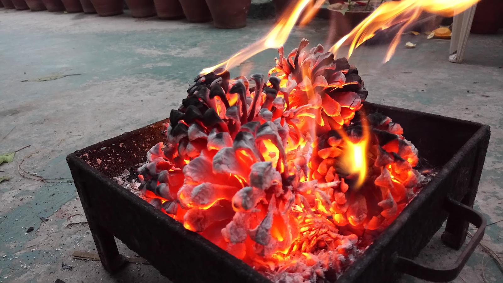 burning pine cones