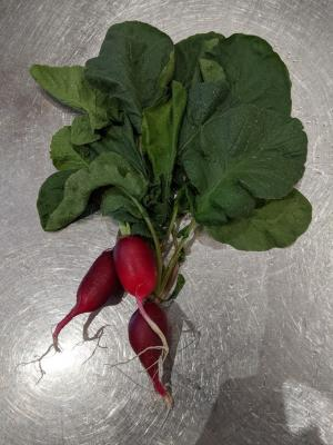 Radishes and its leaves